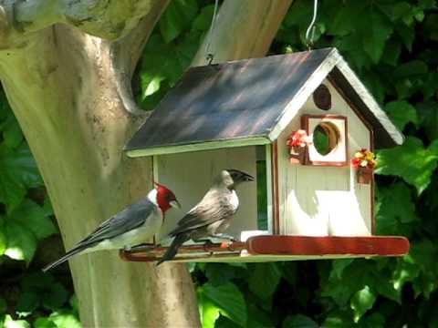 Vrubel bird home feeder comedero para p jaros - Comedero de pajaros ...