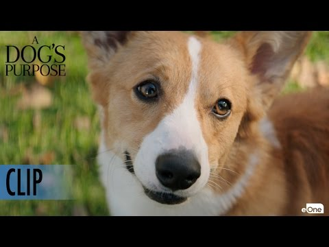 A DOG'S PURPOSE - Clip - 'Maya Tries to get Tino to Chase a Ball'