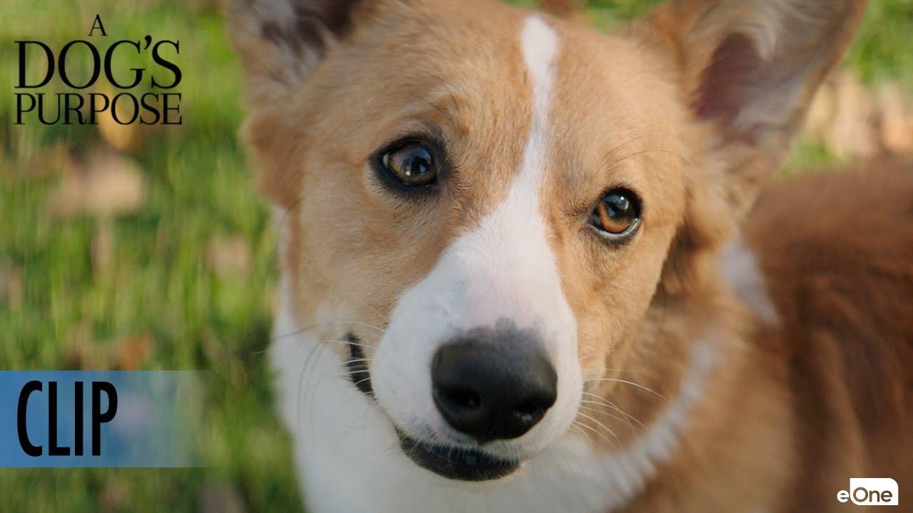 A Dog S Purpose Dog Breeds