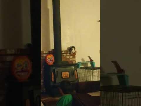 Cat Falls Off Fireplace Cat Fails 2018