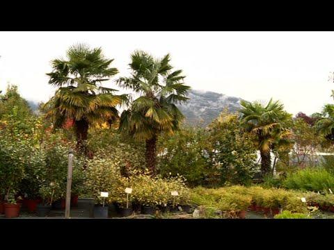 Ils rêvaient d\'un jardin méditerranéen dans les Alpes