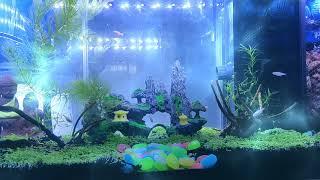 Aquarium Timelapse by oneplus 7 pro