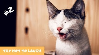🦁 Funniest Animals 2019🐼 - Try Not To Laugh 🤣 | Funny Animals