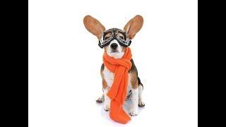 Мастер класс ВЯЖЕМ шапочку собаке ✈ Crochet Dog Aviator Hat ✈  ШАПКА для СОБАКИ с ОЧКАМИ ✌