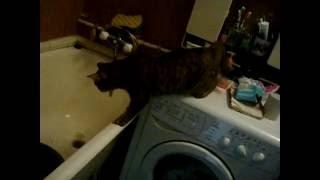 Кошка смотрит на рыбу! Cat looking at fish!