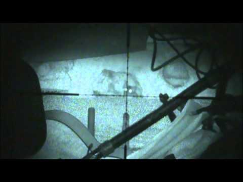 nightshot with infrared laser rat shooting