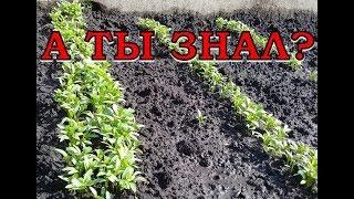 СЕНТЯБРЬ: что еще можно посадить на огороде?