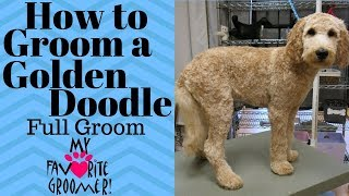 Trimming a Goldendoodle