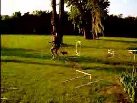 pablo-agility