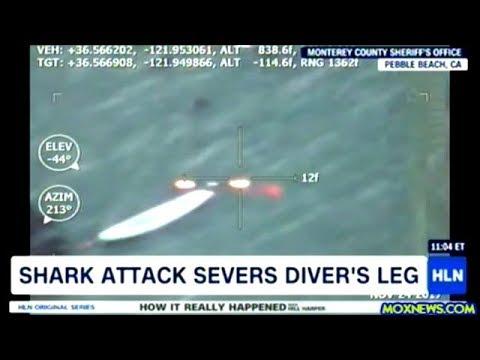 Great White Shark Attack Severs Diver's Leg At Pebble Beach California