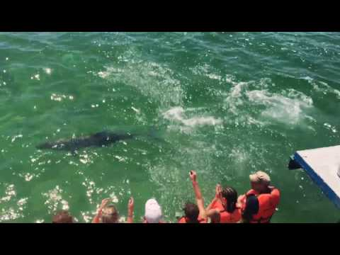 Swimming with dolphins- Varadero Cuba 2017