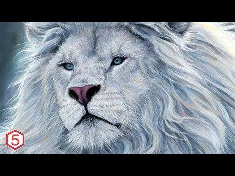 9 Hewan Dengan Kecantikan Luar Biasa
