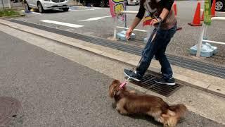 犬の幼稚園 彩羽ちゃんとトレーニング thumbnail