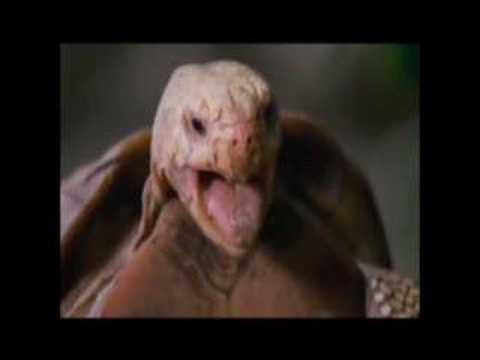 Turtle having sexxxxxxx thumbnail