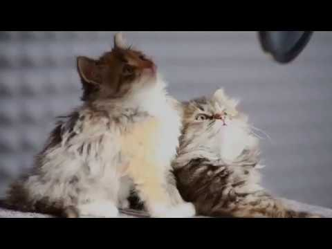 Cat song~Miao song~Animals & co.