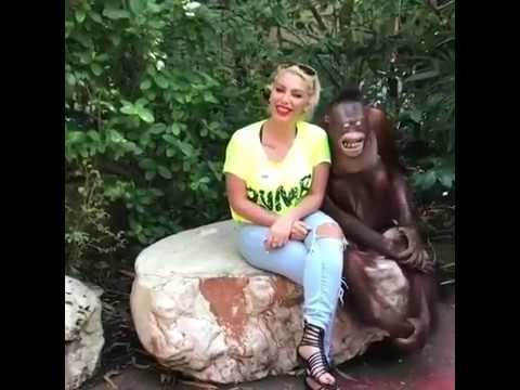 kocak orang hutan raba raba wanita cantik ini