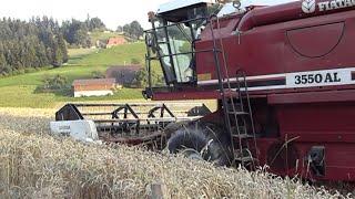 Dreschen mit Laverda 3550 AL | Wheat Harvest