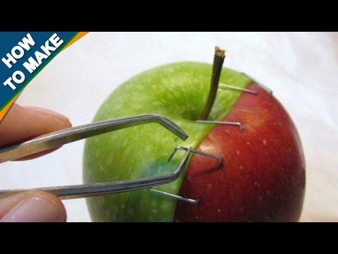 Как скрестить растения в домашних условиях