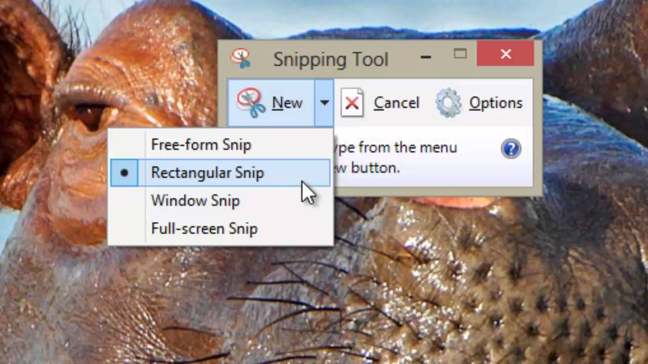 Snipping Tool (Windows 8)