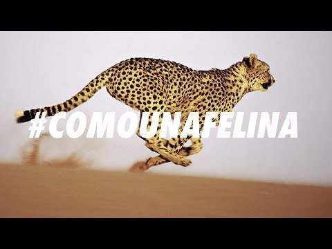 NOVATO 🐆 COMO UNA FELINA Prod. VLOQUE #Minimalist / Chronic Ting Music