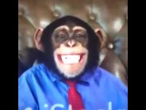 5 Acımasız Maymun yavru Kediyi Döverek Linç Ediyor.
