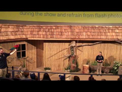 Kansas City Zoo- Wings of Wonder Bird Show