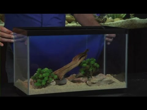 setting up a 10-gallon aquarium : aquariums & fish tanks - youtube