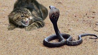 Храбрая кошка против змеи || Brave cat against snake, interesting video подборка