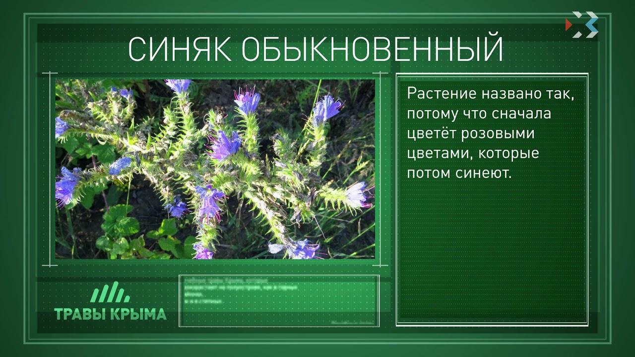 рассказывать лекарственные травы крыма фото и описание вам