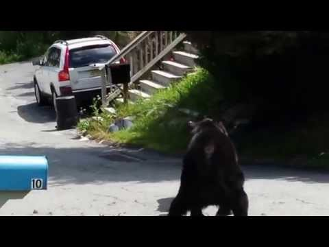 Bear Fight Rockaway NJ Aug 14 2014