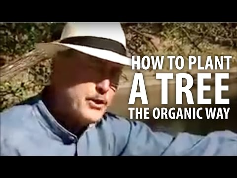 How To Plant A Tree The Organic Way - The Dirt Doctor