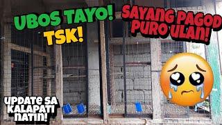 BINAGYO MGA KALAPATI NATIN! UBOS MGA STOCK BIRD COCK! UPDATE SA MAULANG PANAHON!