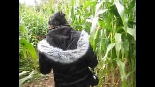 Corn Maze - Fall 2009