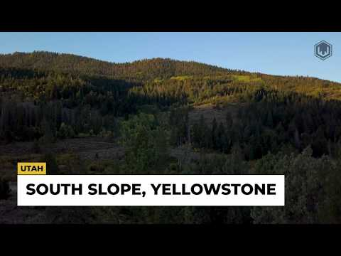 South Slope, Yellowstone | Utah Black Bear | Cougar (Mountain Lion) | Moose
