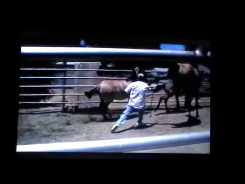 Dangerous Horses - Foolish Horse People - Ignorant Horse Trainers - Horse Sport Abuses