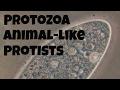 Protozoan Animal Like Protists mp3