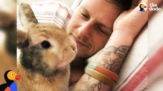 Amazing Rabbit Changes Man's Mind About Animals  CHIEF BRODY | The Dodo  Happy Father's Day!