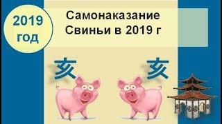 Самонаказание Свиньи в 2019 году