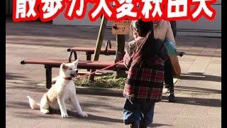 秋田犬 惣右介君 ジャーマンシェパード マック君 シベリアンハスキー ク...