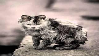 Уродливый кот Стих