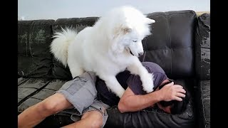 Ouch | Husky's Reaction To Owner Blowing In Her Face
