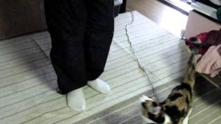 抱っこして~~と、飛んでいく猫