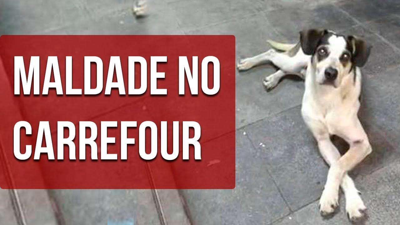 Cachorro Morto No Carrefour Osasco Absurdo Cachorro Carrefour