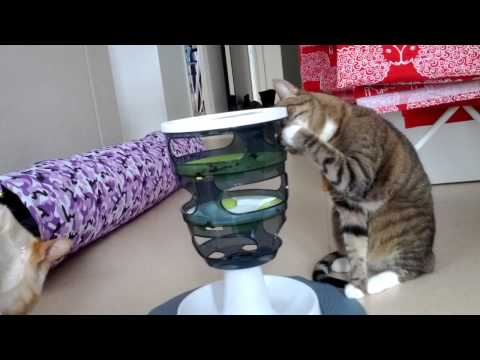 Cat and food activation toy