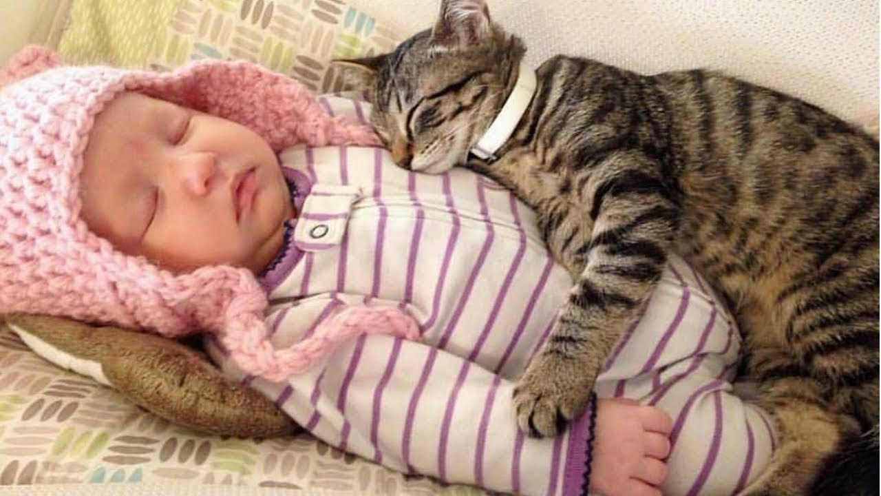 BEST VIDEOS Of Cats Love Babies Compilation || CUTE And ...