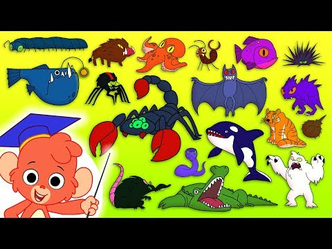 Animal ABC | Learn the alphabet with SCARY ANIMALS for children | abcd videos for kids A to Z