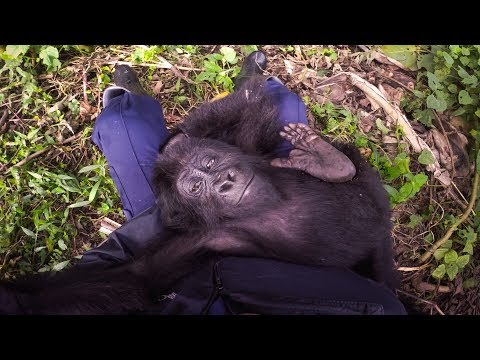 GoPro: Saving Lulingu the Baby Gorilla with GRACE in 4K