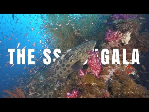 Video Of The Week | Worlds 2nd Best Wreck Dive | SS YONGALA | It's Legend & History