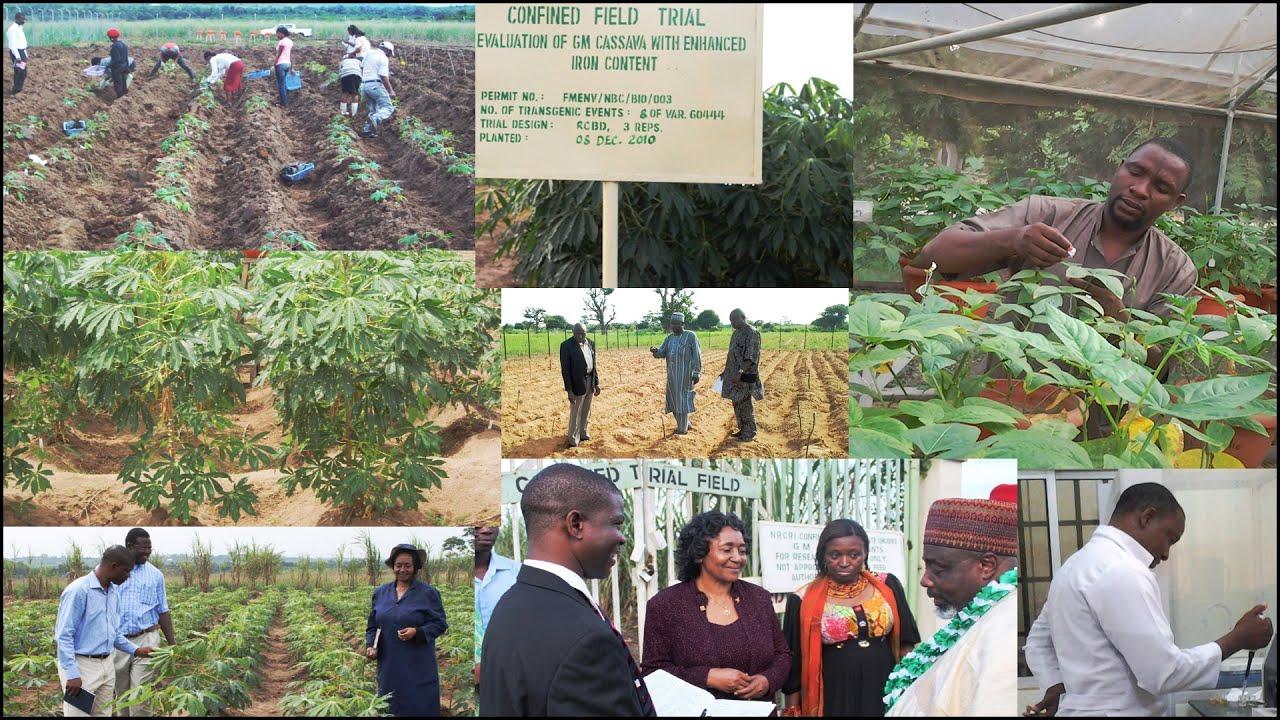 Download Status of Agricultural Biotechnology in Nigeria - Rose Gidado