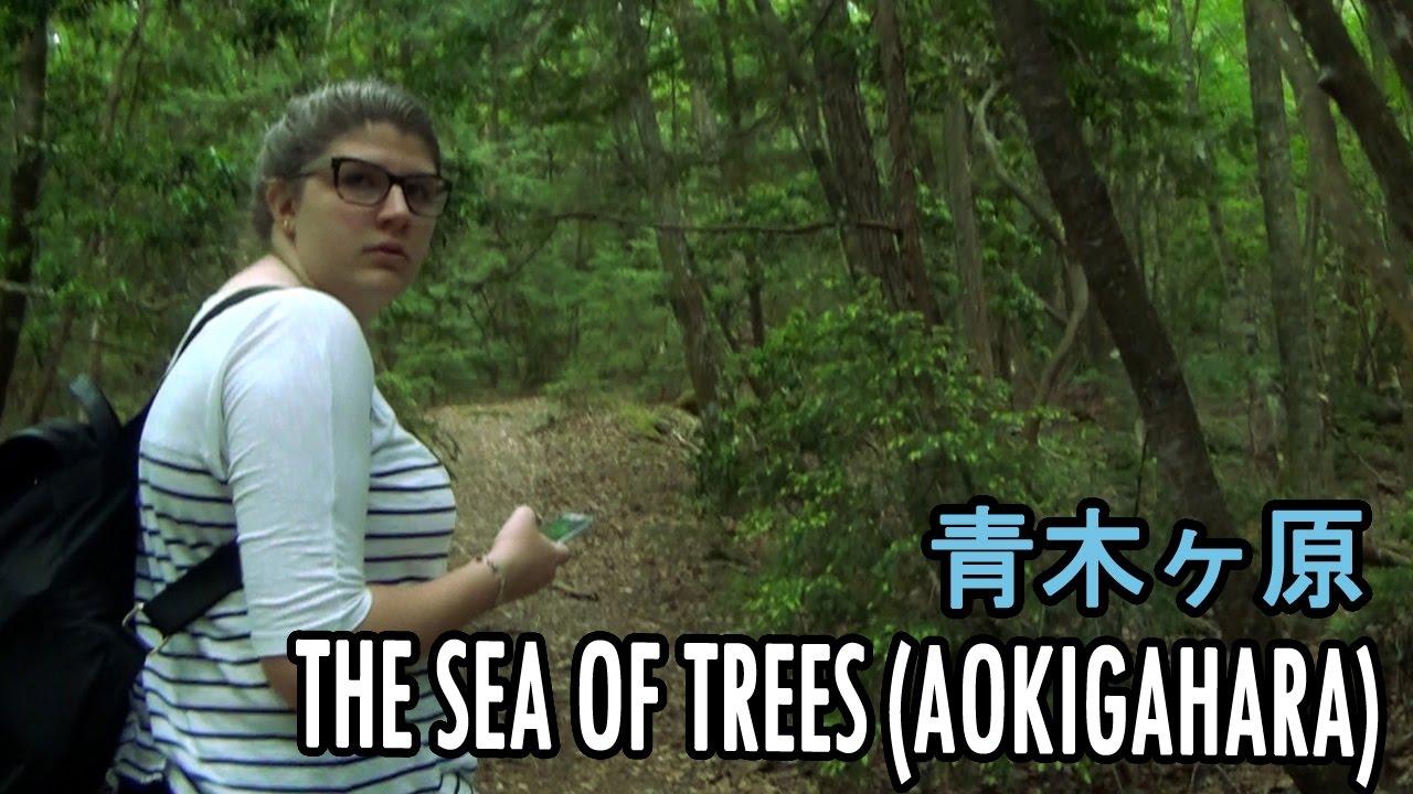 Exploring Aokigahara (The Sea of Trees) [Japan Trip 2016 Day 11]